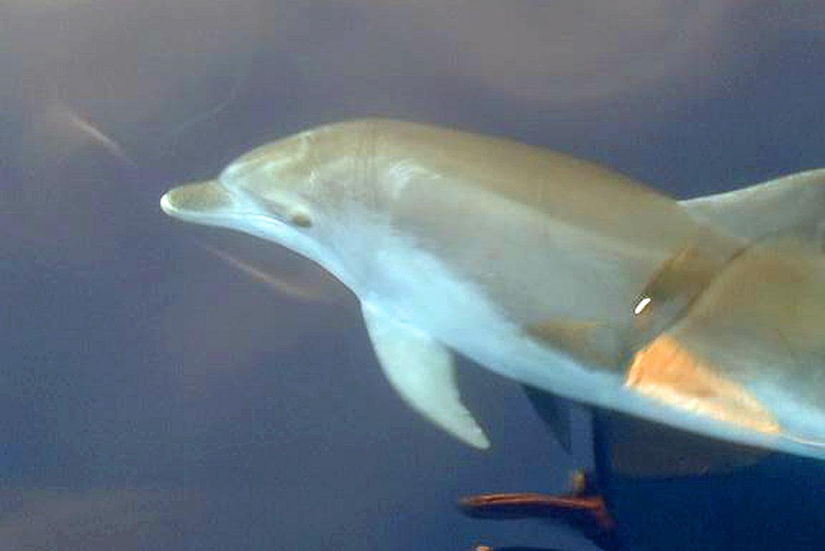 Escursione in barca con delfini